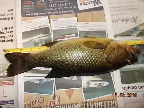 fish lying on top of a newspaper