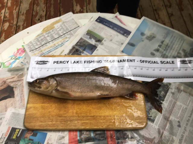 lake trout being measured on a piece of wood and newspaper
